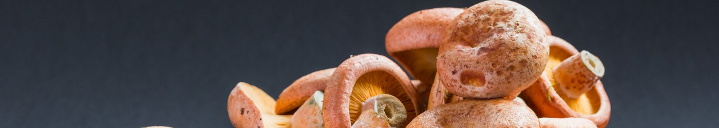 suppliers of wild fungi melbourne